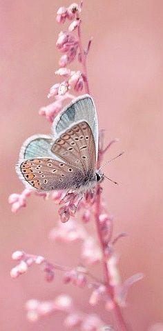 Pretty in Pink - Butterfly