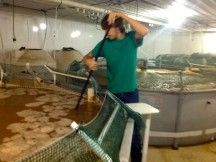 Did you know that they can raise shrimp INDOORS? It's more sustainable!