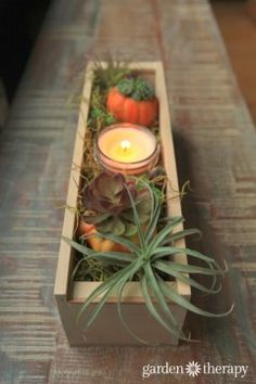Decorate Your Fall Table with Succulents, Air Plants, and Pumpkins