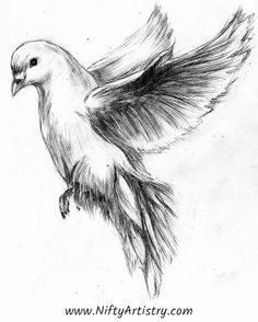 Pencil Drawing Tutorials Quick sketch of dove by MaXymuSFM - Bird Drawings, Pencil Art Drawings, Art Drawings Sketches, Animal Drawings, Cool Drawings, Dove Sketches, Bird Pencil Drawing, Sketches Of Birds, Flying Bird Drawing