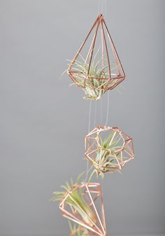 Copper geometric shape with airplant, perfect to hang in the window only against a wall. Airplant needs to be sprayed once a week to keep alive.