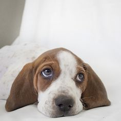 (via The Most Adorable Puppies You'll Ever See / Tecumseh the 9 week old Hound Mix)