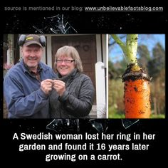 unbelievable-facts: A Swedish woman lost her ring in her garden and found it 16 years later growing on a carrot.