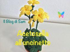 Questo bellissimo  fiorellino di campo  che è ritenuto un infestante visto che prolifica dappertutto è chiamato anche acetosella per vi...