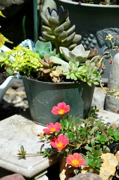 Succulents Cactus Flowers 09 | Flickr - Photo Sharing!