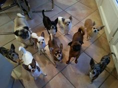 20 raisons de ne jamais adopter un Chihuahua Le Chihuahua, Dogs, Animals, Some People, Dog Breeds, Wild Animals, Lone Wolf, Animales, Animaux