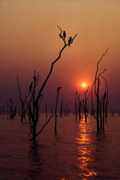 Sunset Photography, Amazing Nature, Sunsets, Sunrise, Summer Themes, Scenery, Africa, Sky, Vacation