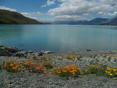 This lake was stunning! Been here! ---Lake Wanaka, New Zealand.