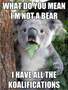 koalas are funny. koalas are smart. koalas are so cute. koalas are brave. koalas are herbivores. Animal Puns, Funny Animals, Cute Animals, Funny Koala, Baby Animals, Animal Humor, Animal Quotes, Wild Animals, Awkward Animals