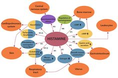 Histamine Intolerance: Understanding the Science - Diagnosis Diet Histamine Intolerance Symptoms, Food Intolerance, High Histamine Foods, Dna And Genes, Nerve Fiber, Compulsive Behavior, Cell Line, Medicine Journal, Central Nervous System