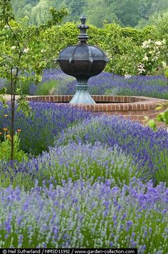Lavender garden and water feature!