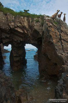 Espectadores curiosas - Asturias occidental. ESPAÑA