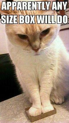 Mini Cat Trap - bwhahahahaha