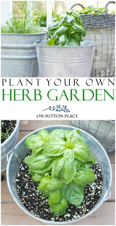 Grow your own herbs with these container herb garden ideas. Easy tips for getting a big harvest from a small amount of space. #herbalife #gardening #gardenideas #gardens #containergardening #basil #mint #tomatoes via @adrake606