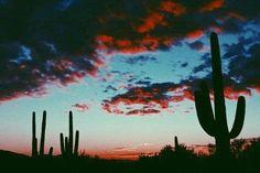 [τriρ τσ τнє ∂єsєrτ] #nature #colors #desert #sky #arte #clouds #iphone #inspiração #cactos #fantasia #patterns #love #incentivo #amazing #lockscreens #família #criatividade #felicidade #tumblr #chique #travel #trip #arlivre #fotografia #alternativo #background #beauty #sunset #life #beautiful #L4L #amazing #tagforlikes #followback