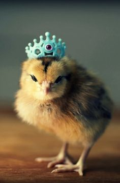 Easter Chick ~ crown ✿⊱╮