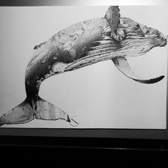 Humpback whale's dot Whale Tattoos, Whale Art, Wale, Sketch Inspiration, Humpback Whale, Dragon Art, Wildlife Art, Animal Paintings, Sea Creatures