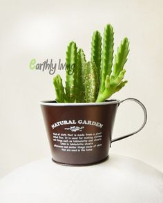office planter. coffee cup small plant pot cactus succulent flower planter indoor office garden