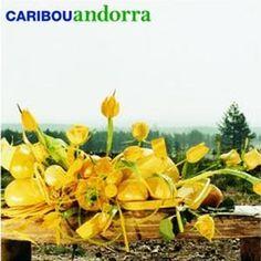 Caribou - Andorra 2007