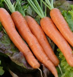 Napoli Organic carrots are one of the best tasting carrots on the market. They actually become sweeter after frost. A great addition to any winter garden!