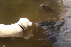 Fisherman? Fisherdog? #animals #labrador #fishing Cute Funny Animals, Funny Cute, Funny Dogs, Cute Puppies, Cute Dogs, Dogs And Puppies, Doggies, Animals And Pets, Baby Animals