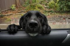 You're not going for a car ride without me .......ARE YOU?