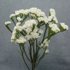 ACCENT FLOWER - White statice or baby's breath as accent flower in bouquet and hair - this is my only specific flower request. anything white and similar to these that can work in hair and bouquets is fine List Of Flowers, Cut Flowers, White Flowers, Beautiful Flowers, Dried Flowers, Inexpensive Centerpieces, Wedding Bouquets, Wedding Flowers, Florist Supplies