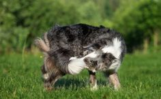 What OCD-Like Behavior Looks Like in Pets