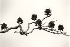 Chema Madoz - Photography - Surrealism