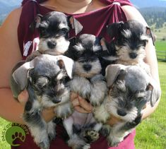 baby schnauzers. I love the angry one in the middle