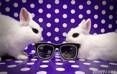 Bunnies in Sunnies | Cute Rabbits Wearing Sunglasses