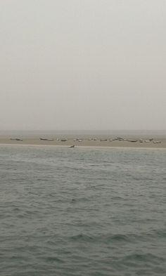 Seehundbänke - Amrum