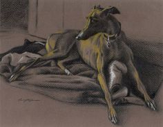 """""""Essie in Pencil No. - colored pencil on brown paper Greyhound Art, Lurcher, Etchings, Brown Paper, Whippet, Dog Art, Essie, Colored Pencils, Art Pieces"""