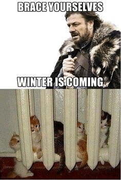 Google képkeresési találat: http://dailypicksandflicks.com/wp-content/uploads/2012/11/brace-yourself-winter-is-coming-radiator-kittens.jpg