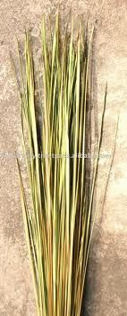 tropical dried Cogon grass, WEED for dried flower arrangement Filipino Architecture, Grass Weeds, Dry Plants, Dried Flowers, Flower Arrangements, Tropical, Herbs, Exterior, Houses