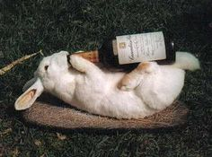 Drunk Bunny Completely out