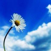 Ideas simple bridal bouquet blue floral design for 2019 Margaritas Gerbera, White Flower Wallpaper, Bridal Bouquet Blue, Computer Wallpaper, Beautiful Sky, Amazing Quotes, Photos, Pictures, Organic Gardening