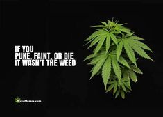 #marijuana #cannabis #seeds #weed #joint #ganja #smoke #bong #roor #vape #dab #oil #medical #high #thc #cbd #trichrome #amber #bud #illigal #legal #nirvana #420 #weed #weedportal #kush #stoned #high #nirvana #pot #marijuana #marihuana #420 #drugs #drug #joint #blunt #cannabis #haze #smoking #smoke #smoker #smokers #plant #seed #seeds #skunk #grow #nirvanaseeds #nirvanashop