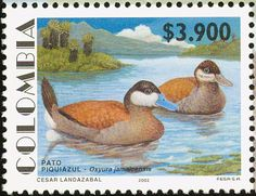 Ruddy Duck stamps - mainly images - gallery format