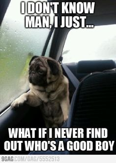 Introspective Pug...
