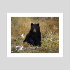 #INPRNT #fine art #print #poster #art Black Bear, Brown Bear, Print Poster, Wildlife, Fine Art, Art Prints, Printed, Gallery, Paper