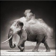 Breathtaking Wildlife Photography by Nick Brandt 2
