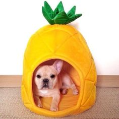 French Bulldog in a Pineapple Dog Training Methods, Basic Dog Training, Bulldog Puppies, Dogs And Puppies, Puppy Obedience Training, Positive Dog Training, Easiest Dogs To Train, Dog Behavior, Pet Dogs