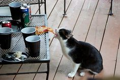 Mmm...pizza!  I'll just take this!                                 Look out Kitty, it's not vegan!