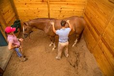 Complementary Medicine On the Rise: It's no longer uncommon for owners to seek out additional avenues of horse care. Horse Therapy, Sports Therapy, Horse Anatomy, All About Horses, Horse World, Horse Tips, Back Pain Relief, Horse Pictures, Horse Breeds