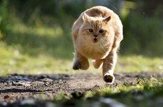 Run.... Baby...... !!! by Dangerouz Yusra, via 500px