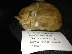 Best of cat shaming in 2013–15 Pics