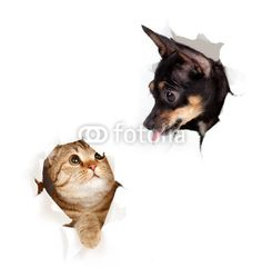 cat and dog in paper side torn hole isolated - 39945201