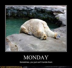 "Funny ""I Hate Monday"" Pictures - 22 Pics Polar Bear Funny, Funny Bears, Polar Bears, I Hate Mondays, Demotivational Posters, Funny Me, Funny Stuff, Hilarious, Funny Things"