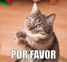 miaucoles_por_favor_720